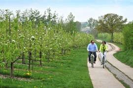 Blossom_cyclists